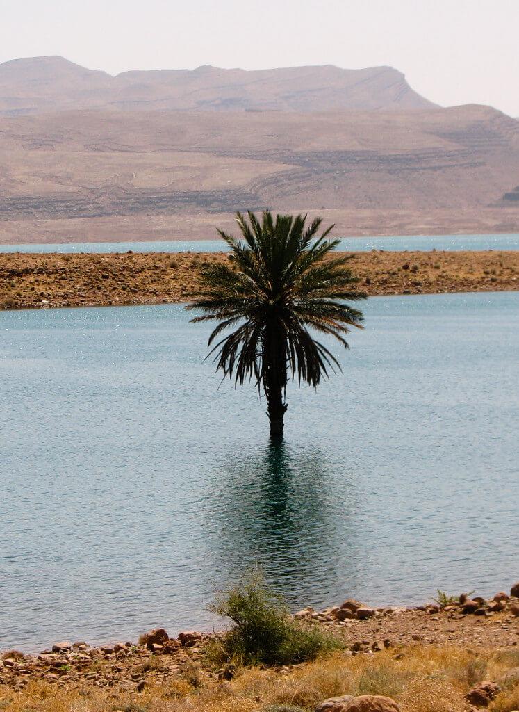 lake with tree close