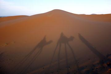 Rosalie W. - Camel ride shadows