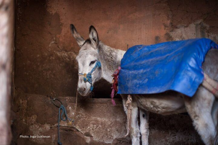 donkey-picture